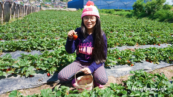 Baguio City - strawberry picking - La Trinidad - birthday adventure
