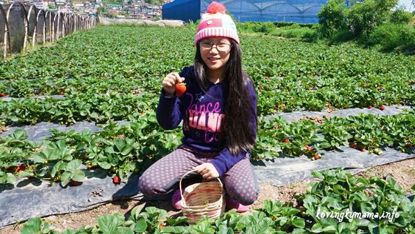 Baguio City - strawberry picking - La Trinidad - birthday adventure