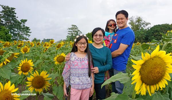 OISCA Sunflower Garden - sunflowers - uses of sunflowers - symbolism of sunflowers - family travel - mommy blogger - Bacolod mommy blogger - Negros Occidental